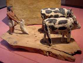 The Ox drawn Plow Ancient Egypt
